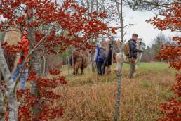 Ein herbstlicher Wald in der Eifel. Eine Gruppe Menschen zieht beim Trekking mit Lamas durch die Landschaft.