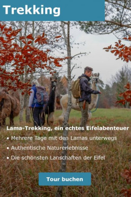 Eine Lichtung in der Eifel. Eine Gruppe junger Menschen beim Trekking unterwegs mit Lamas.