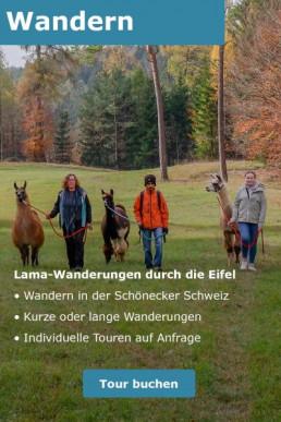Eine Lichtung im Wald. Vier Menschen und vier Lamas wandern auf uns zu.