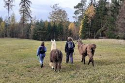 Eine Wiese in der Eifel. Zwei Lamas werden von zwei Menschen, die Rucksäcke tragen, Richtung Waldrand geführt.