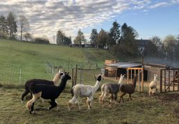 Blick auf den Paddock unserer Lama-Weide