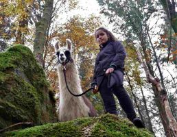 Ein Ausflug mit Kindern und Lamas macht stolz.