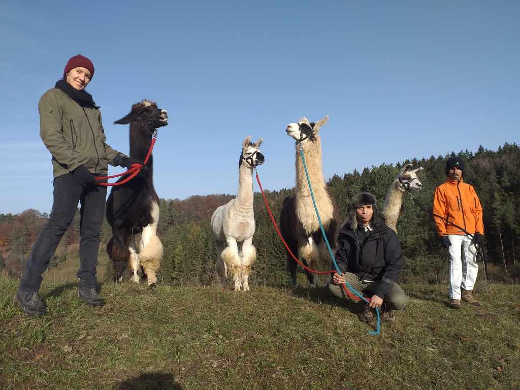 Lama Wanderung in der Schönecker Schweiz